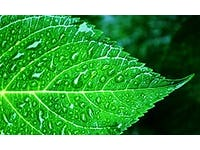 Mimicking nature, water-based 'artificial leaf' produces electricity
