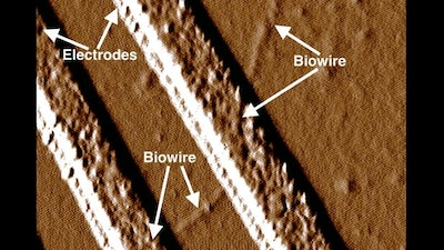 Common soil bacteria creates nano sized conductive wires
