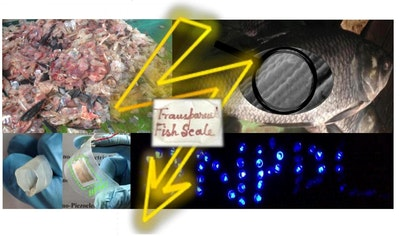 Fish biowaste converted to piezoelectric energy harvesters