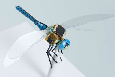 Equipping insects for special service