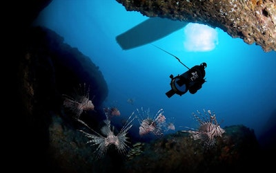 Underwater robots to tame lionfish population