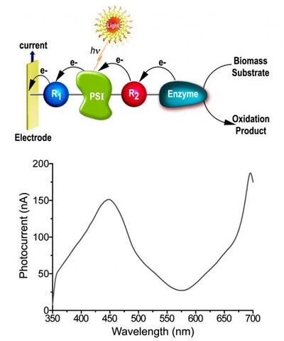Solar energy into electric power via photobioelectrochemical cells