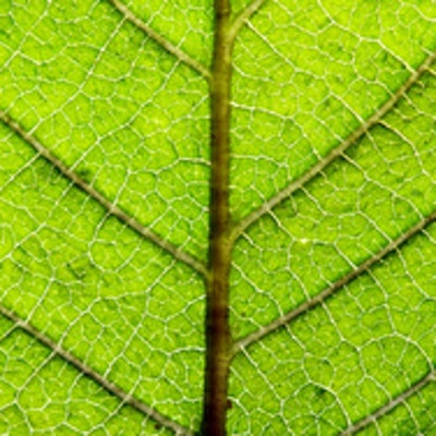 Scientists uncover photosynthetic puzzle