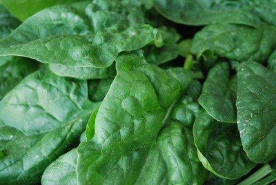 Spinach could lead to plant-mimicking solar cells