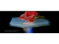 New directions for the aerogel market