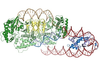 How CRISPR proteins find their target
