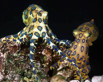 Octopus inspires 3-D texture morphing project