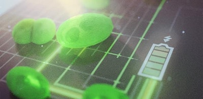 Harnessing the power of algae: new, greener fuel cells move closer
