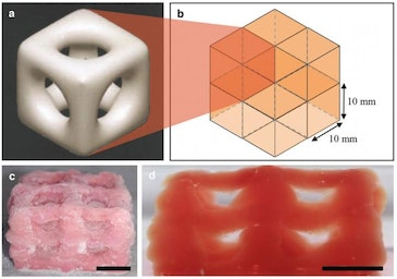 3D printing creates super soft structures that replicate brain, lungs