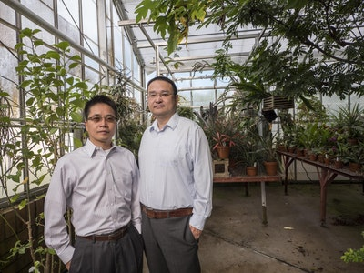 Light-splitting greenhouse film