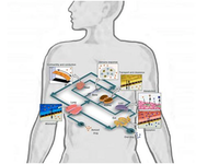 Human-on-a-Chip: using tissue engineering to replicate the human body