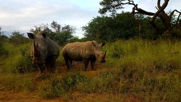 AI to investigate illegal wildlife trade on social media