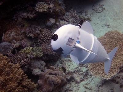 Soft robotic fish swims alongside real ones