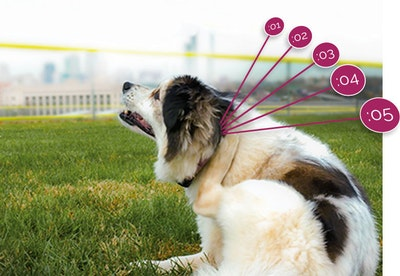 Validation of wearable technology for dogs