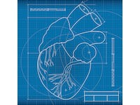 Long term in vivo performance of tissue engineered heart valves