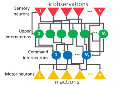 Artificial intelligence: Parking a car with only 12 neurons
