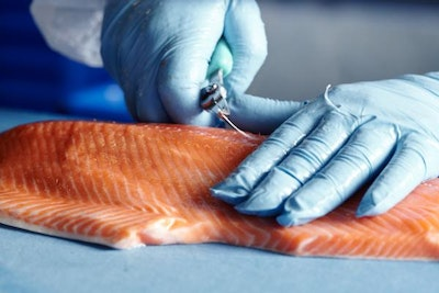 King salmon automated fish bone removal