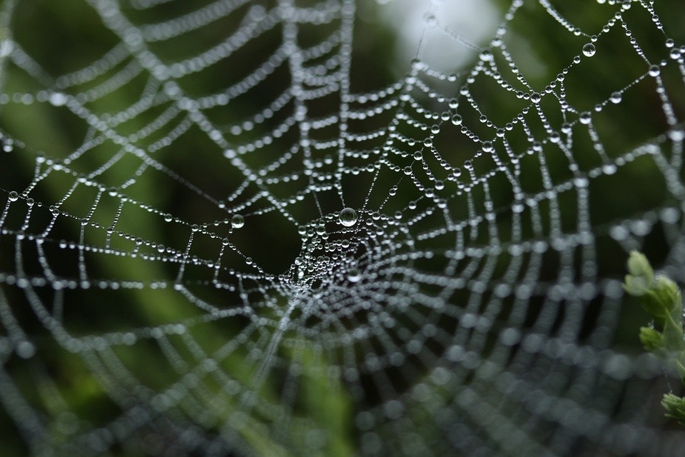 why is spider silk so strong