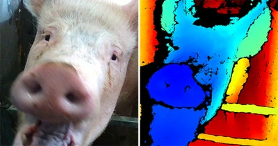 Facial recognition technology aims to detect emotional state in pigs