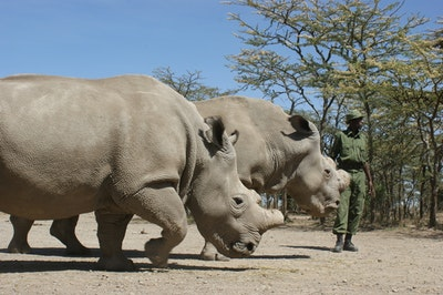 Robots to the rhino rescue