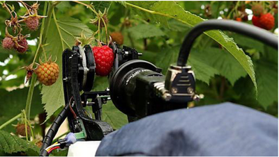 Field trials of raspberry harvesting robot system