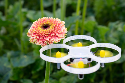 Trial to control insects in greenhouses with drones