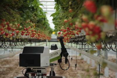 Strawberry-picking robots to gather enough fruit for Wimbledon