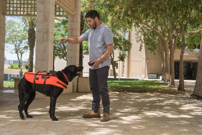Wearable trains dogs to respond to haptic vibration commands