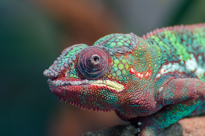 Chameleon-inspired soft robot can interact with environment