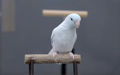 Researchers study birds to improve how robots land