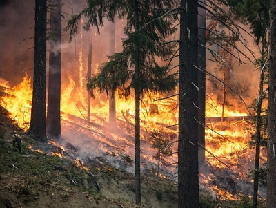 Machine learning to find out which wildfires will burn out of control