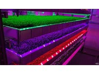 Could Vertical Farming be the Solution to Supermarket Supply Problems