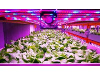 How Vertical Farming Disrupts the Food Supply Chain